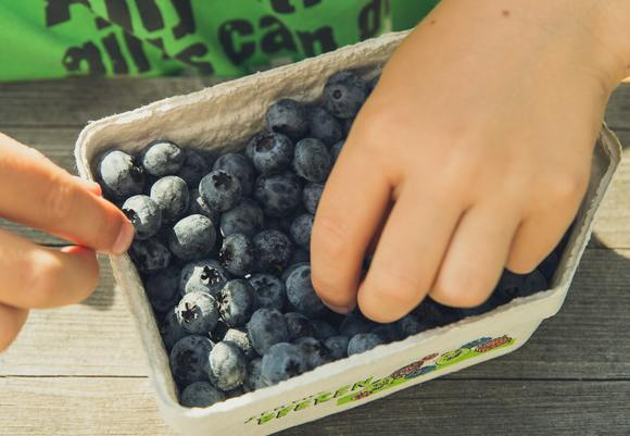 Agriculture blueberry business 175422