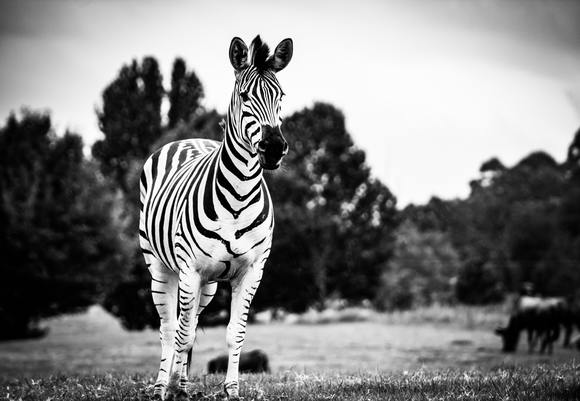 Animal animal photography black and white 619863